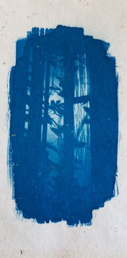 Franck Rondot Photographe   046   alternative  argentique  cyanotype  photographie  scann