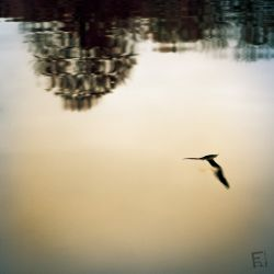 Franck Rondot Photographe   038   commelles  etangs  nature  oise